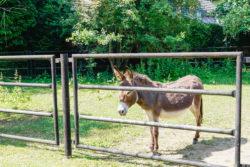 für klein und groß der Tierpark Chemnitz